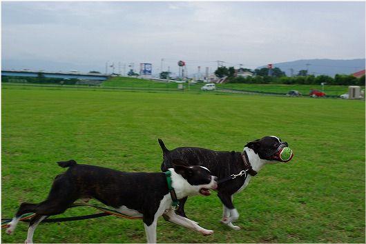 2009.7.11 (1).jpg