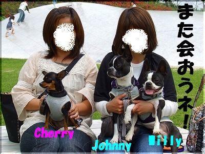 cherry2 (3).jpg